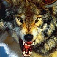 Bigredwolf