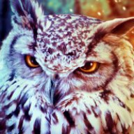 Lord of Owls