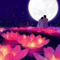Moonflower3